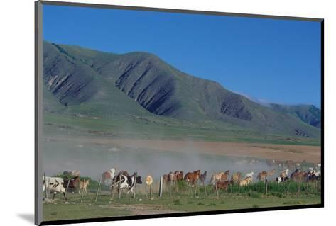 Horse and cattle herd at Tafi dell Valle near Tucuman, Argentina--Mounted Art Print