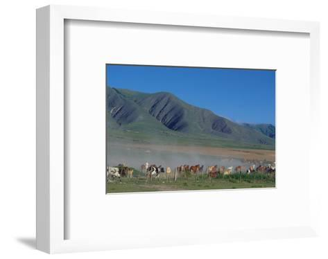 Horse and cattle herd at Tafi dell Valle near Tucuman, Argentina--Framed Art Print