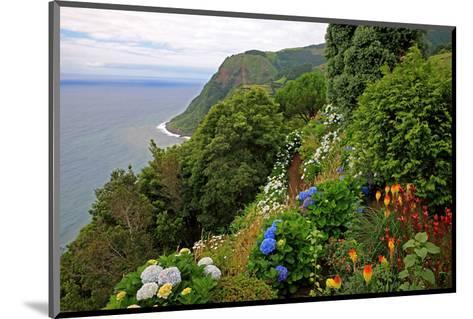 Hortensias and torch lilies on a steep slope near Nordeste, Sao Miguel Island, Azores, Portugal--Mounted Art Print