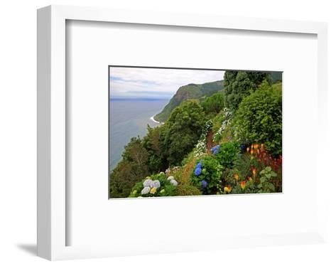Hortensias and torch lilies on a steep slope near Nordeste, Sao Miguel Island, Azores, Portugal--Framed Art Print