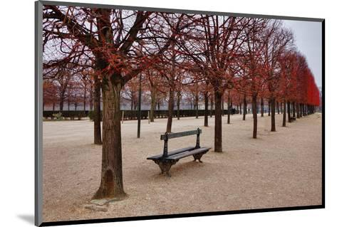 Tuileries Gardens in Winter, Paris, Ile de France, France--Mounted Art Print
