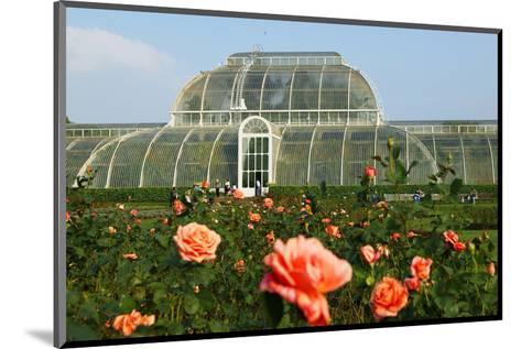 Palm house in the Royal Botanic Gardens, Kew, London, South of England, Great Britain--Mounted Art Print