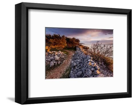 Olive Trees on the Beach, Island of Krk, Croatia--Framed Art Print