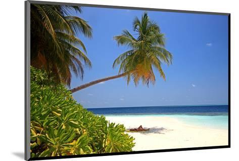 Palm-lined Beach at the Angsana Ihuru Hotel, Ihuru Island, North Male Atoll, Maldives--Mounted Art Print