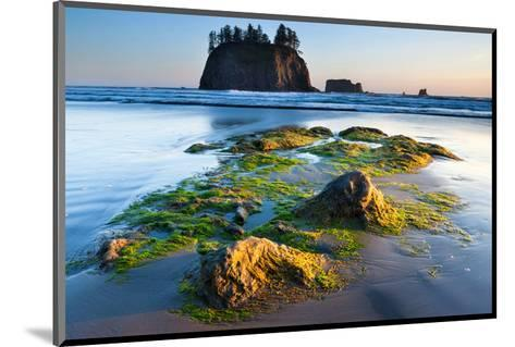 Second Beach at Olympic National Park, Washington, USA--Mounted Art Print