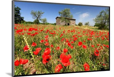Poppy Field in front of a Country House on the Hills near Orvieto, Province of Terni, Umbria, Italy--Mounted Art Print