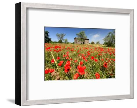 Poppy Field in front of a Country House on the Hills near Orvieto, Province of Terni, Umbria, Italy--Framed Art Print
