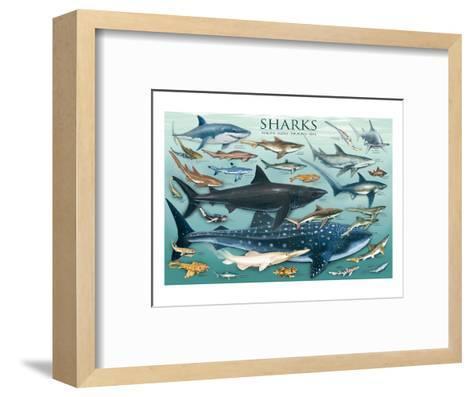 Sharks--Framed Art Print