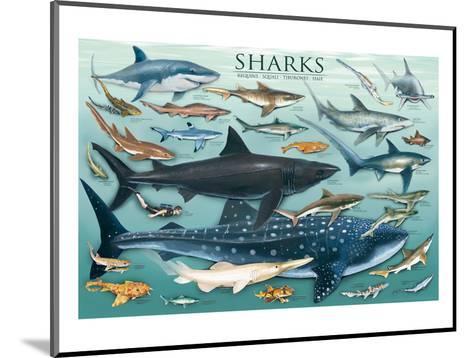 Sharks--Mounted Art Print