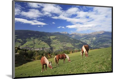 Haflinger horses on a mountain pasture, Valle d'Isarco, Dolomites, Province of Trento, Italy--Mounted Art Print
