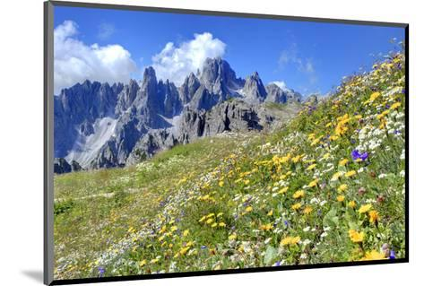 Meadow at Sexten Dolomites Nature Park, Province of Bolzano, South Tyrol, Italy--Mounted Art Print