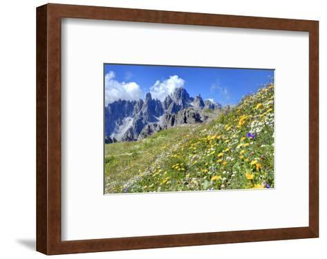 Meadow at Sexten Dolomites Nature Park, Province of Bolzano, South Tyrol, Italy--Framed Art Print