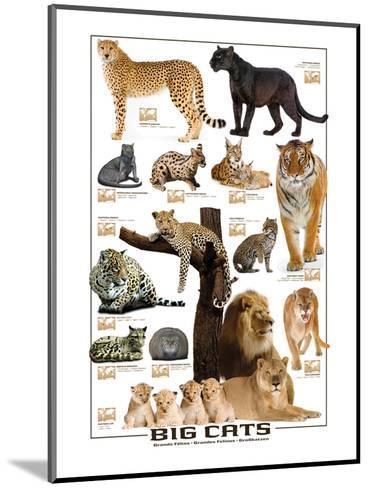 Big Cats--Mounted Art Print