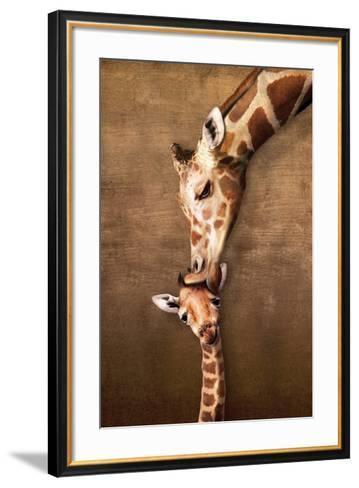 Giraffe Mother's Kiss--Framed Art Print