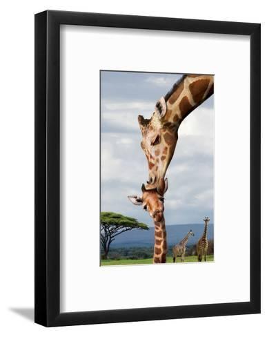 Giraffe Kissing Baby--Framed Art Print