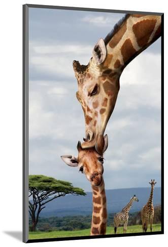Giraffe Kissing Baby--Mounted Art Print