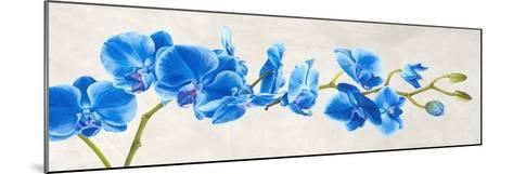 Blue Orchid-Shin Mills-Mounted Art Print
