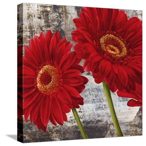 Red Gerberas I-Jenny Thomlinson-Stretched Canvas Print