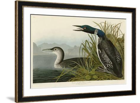 Great Northern Diver or Loon-John James Audubon-Framed Art Print