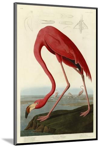 American Flamingo-John James Audubon-Mounted Art Print