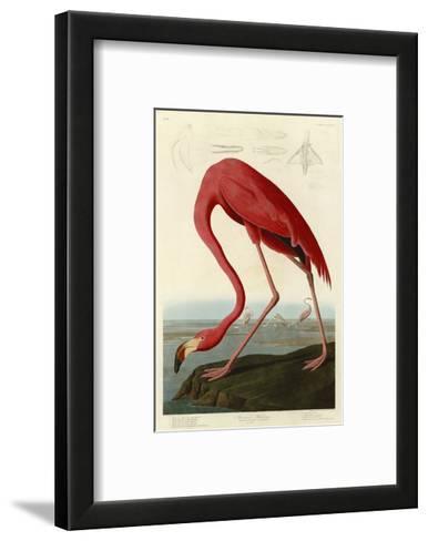 American Flamingo-John James Audubon-Framed Art Print