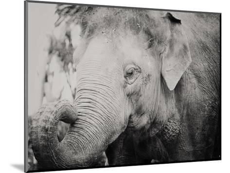 Baby Elephant-Ashley Davis-Mounted Art Print
