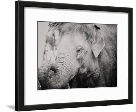 Baby Elephant-Ashley Davis-Framed Art Print