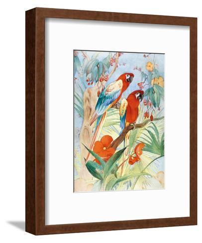 The Quaint Macaw, Red and Blue Macaws (Ara Macao) , From the Painting entitled Aristocrats-Edward Detmold-Framed Art Print