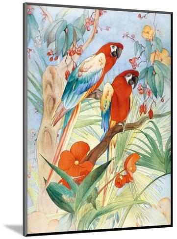 The Quaint Macaw, Red and Blue Macaws (Ara Macao) , From the Painting entitled Aristocrats-Edward Detmold-Mounted Art Print