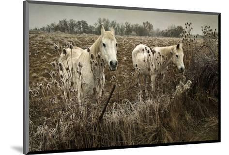 White Horses-David Winston-Mounted Giclee Print