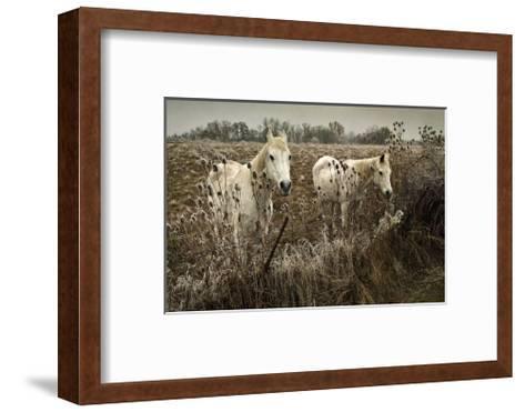 White Horses-David Winston-Framed Art Print