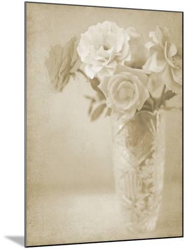 Soft Roses I-Shana Rae-Mounted Giclee Print