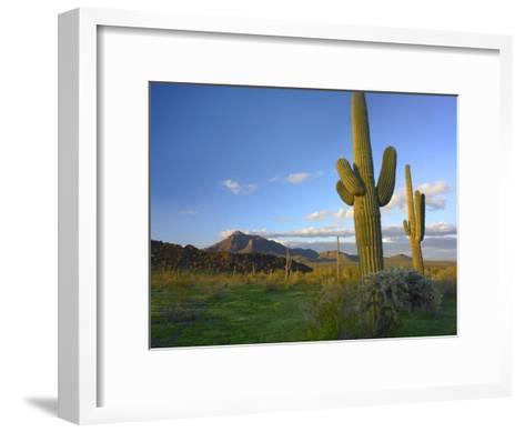 Saguaro and Teddybear Cholla, Picacho Peak State Park, Arizona-Tim Fitzharris-Framed Art Print