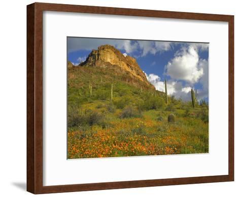 California Poppy and Saguaro cacti, Organ Pipe Cactus National Monument, Arizona-Tim Fitzharris-Framed Art Print