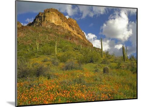 California Poppy and Saguaro cacti, Organ Pipe Cactus National Monument, Arizona-Tim Fitzharris-Mounted Art Print