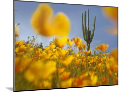 Saguaro cactus and California Poppy field at Gonzales Pass, Tonto National Forest, Arizona-Tim Fitzharris-Mounted Art Print