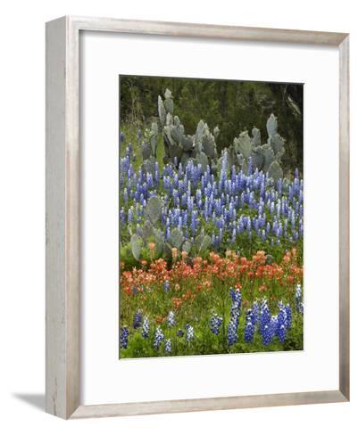 Bluebonnet and Pricky Pear cactus, Texas-Tim Fitzharris-Framed Art Print
