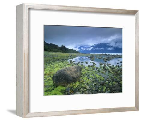 Low tide revealing algae covered rocks, Alaska-Tim Fitzharris-Framed Art Print