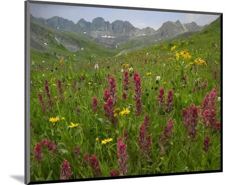 Indian Paintbrush meadow at American Basin, Colorado-Tim Fitzharris-Mounted Art Print