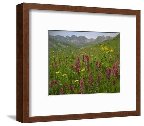 Indian Paintbrush meadow at American Basin, Colorado-Tim Fitzharris-Framed Art Print