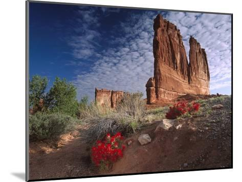 Paintbrush and the Organ Rock, Arches National Park, Utah-Tim Fitzharris-Mounted Art Print