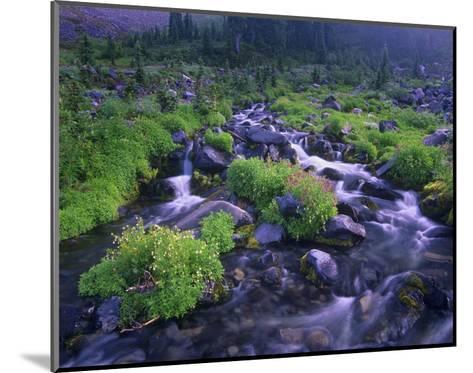Paradise River with wildflowers, Mount Rainier National Park, Washington-Tim Fitzharris-Mounted Art Print