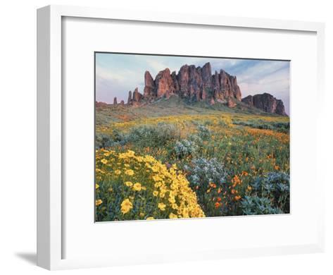 California Brittlebush Lost Dutchman State Park, Superstition Mountains, Arizona-Tim Fitzharris-Framed Art Print