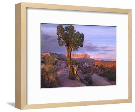 Single-leaf Pinyon Pine at Toroweap Overlook, Grand Canyon National Park, Arizona-Tim Fitzharris-Framed Art Print