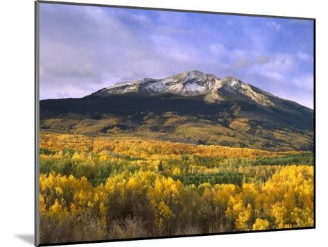 East Beckwith Mountain and trees in fall color, Gunnison National Forest, Colorado-Tim Fitzharris-Mounted Art Print