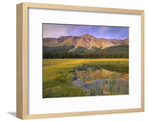 Observation Peak and coniferous forest reflected in pond, Banff National Park, Alberta-Tim Fitzharris-Framed Art Print