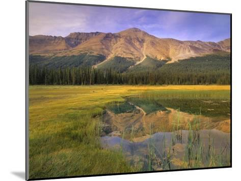Observation Peak and coniferous forest reflected in pond, Banff National Park, Alberta-Tim Fitzharris-Mounted Art Print