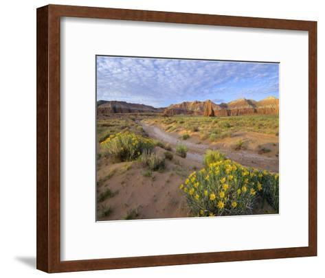 Wildflowers growing along dirt road, Temple of the Moon, Capitol Reef National Park, Utah-Tim Fitzharris-Framed Art Print