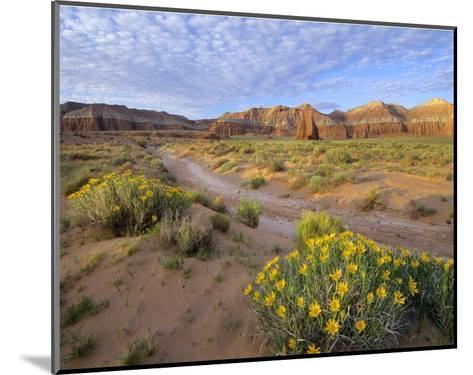 Wildflowers growing along dirt road, Temple of the Moon, Capitol Reef National Park, Utah-Tim Fitzharris-Mounted Art Print