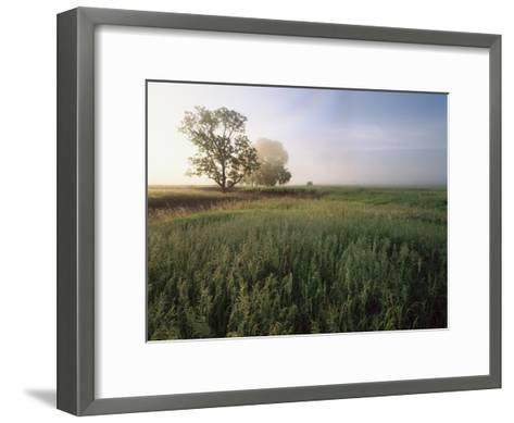Oak trees shrouded in fog, Flint Hills, Kansas-Tim Fitzharris-Framed Art Print